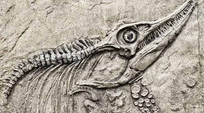 Serpent Bible Eve | Images Guru
